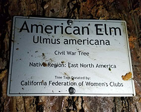 The 85 foot American Elm was from the site of the Tomb of President William McKinley, the last American President to have served in the Civil War; he was buried in 1901.  It was added to California's Civil War Grove in 1902.