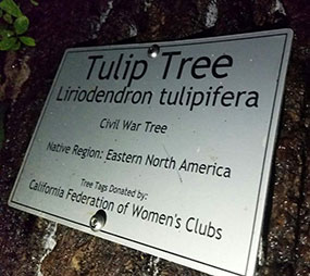 The 90 foot Tulip Tree was planted as a sapling in 1897 and came from the Battlefield of Five Forks, Virginia.
