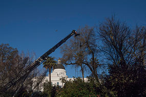 Early in the morning of Thursday, March 2, 2017, a crane was maneuvered into the park and positioned to lift the four massive trunk sections