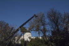 Historic Tree Removal 4